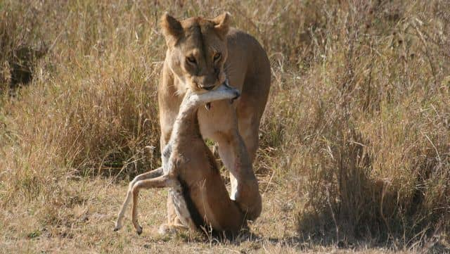 Scared s**tless on the Serengeti